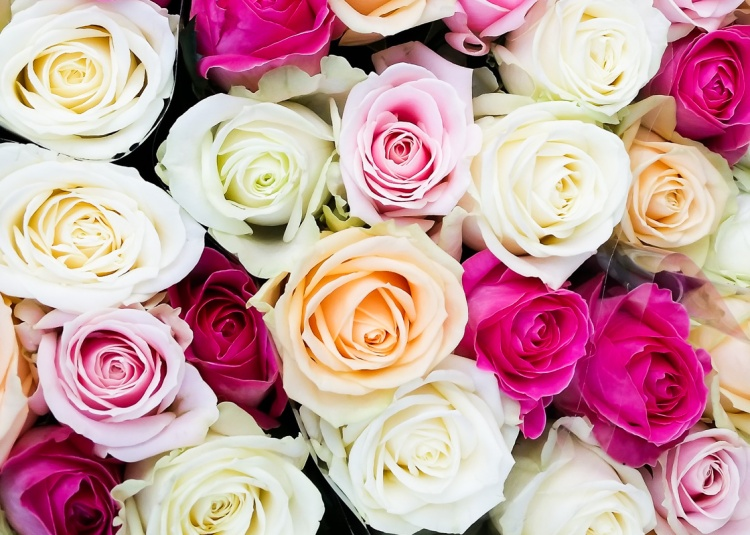 roses-valentines-day